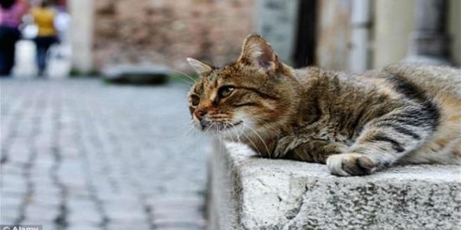 قطط-مشاهد24