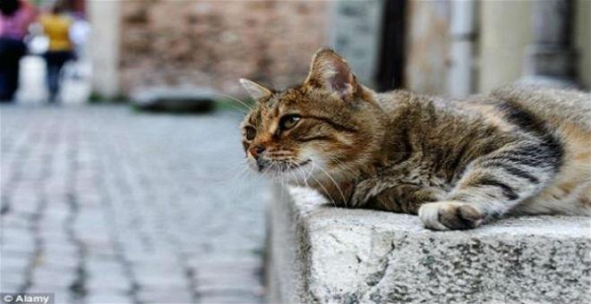 بلدة إسبانية تعطي حقوقا كاملة للقطط والكلاب