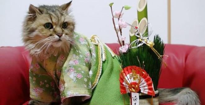صور رائعة .. قطط ترتدي الزي الشعبي في اليابان