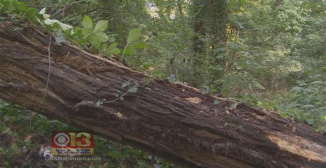 إنقاذ ستيني ظل محاصرا 7 أيام تحت جذع شجرة