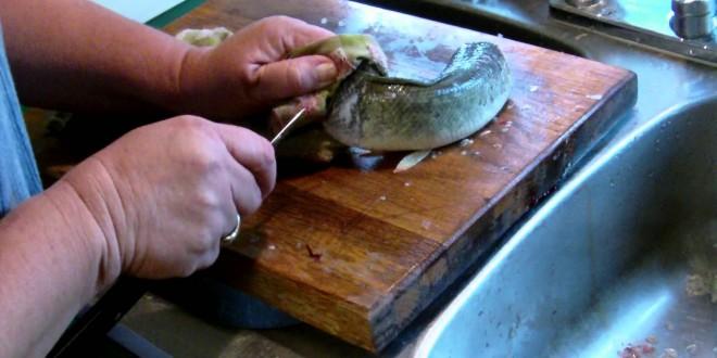 سمكة تبقى على قيد الحياة 40 دقيقة بعد قطع رأسها