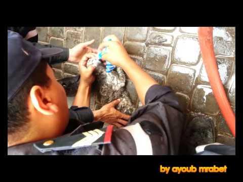 انقاذ قطة من الموت في اكادير