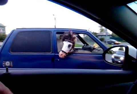 حصان يتجول مع مالكه فى سيارة