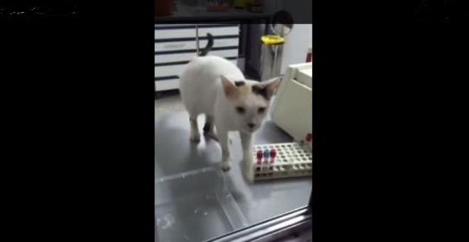 شاهد.. قطة