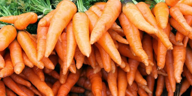 Carrot-ooty