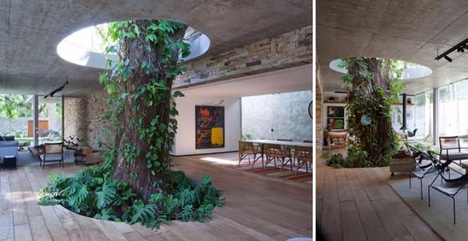 بالصور.. أشجار تطل من قلب أسقف المنازل والسلالم