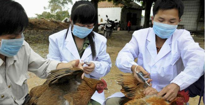 إنفلونزا الطيور تعود للظهور من جديد في انجلترا
