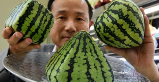 اليابانيون يدفعون أسعارا خيالية لاقتناء بطيخ على شكل القلب والمكعب