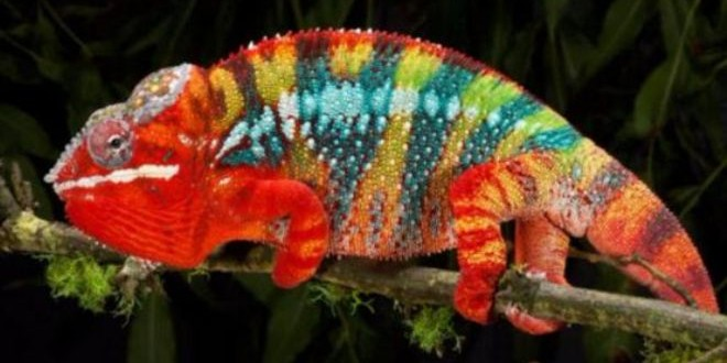 150821163558_the_truth_about_chameleons_512x288_michaeld.kernnpl