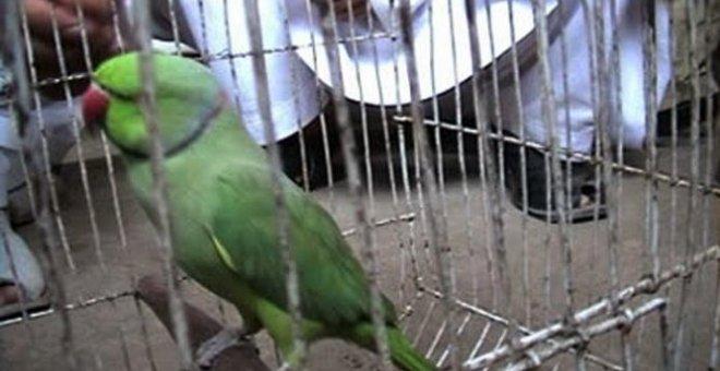 الشرطة الهندية تستدعي «ببغاء» متهم بـ«سوء السلوك»