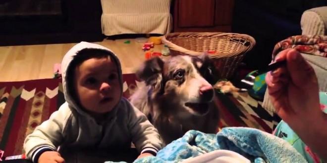 """كلب ينطف كلمة """"ماما"""""""