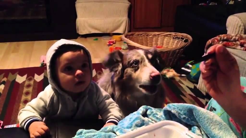 كلب ينطق كلمة