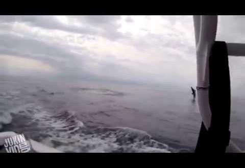 قرش يرعب الصيادين بقفزاته المتكررة