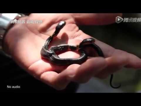 فيديو... ثعبان نادر برأسين