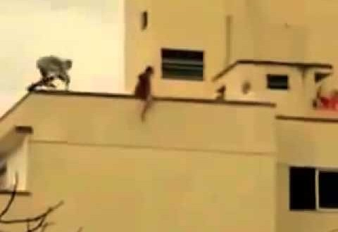شاب ينقذ فتاة من الإنتحار
