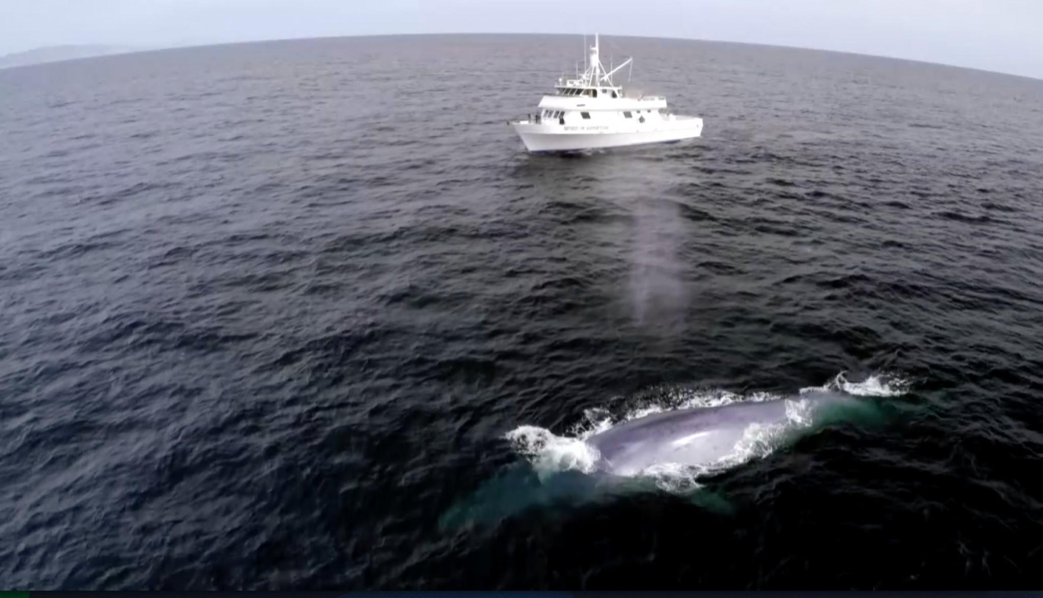 شاهد كيف ظهر هذا الحوت الضخم في الوقت المناسب