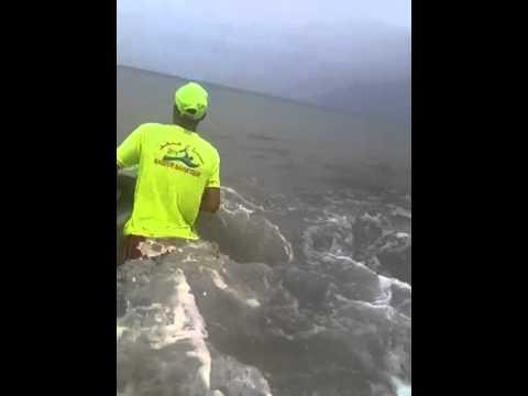 خروج دلفين صغير بشاطئ الفنيدق