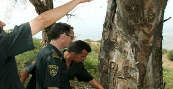 تونس..عناصر إرهابية تستهدف حراس الغابات