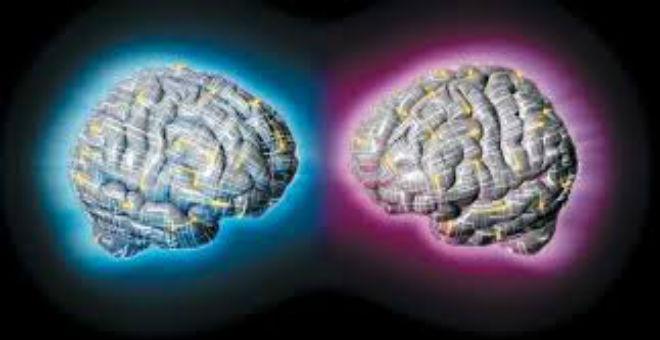 أبحاث تظهر الفرق في القدرات العقلية بين المرأة و الرجل