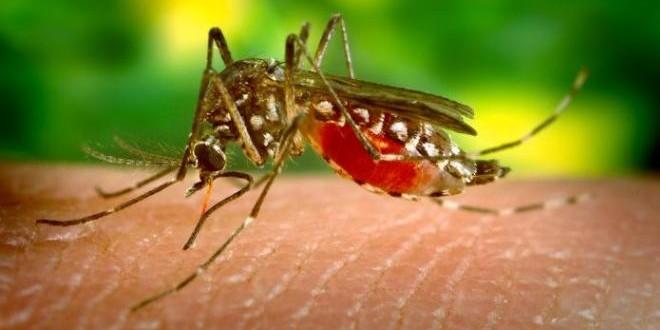mosquito05