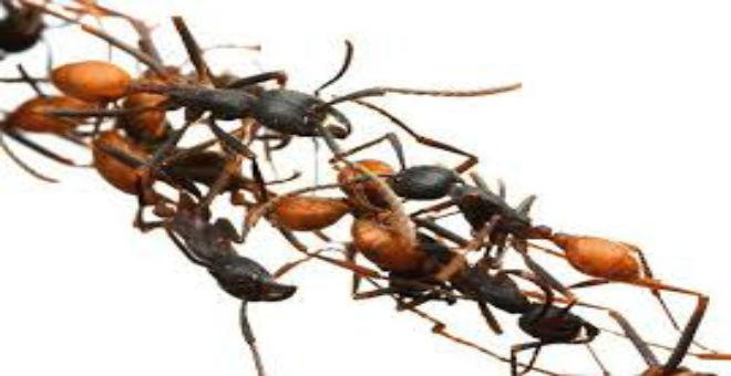 10 وسائل طبيعية للتخلص من النمل في المنزل