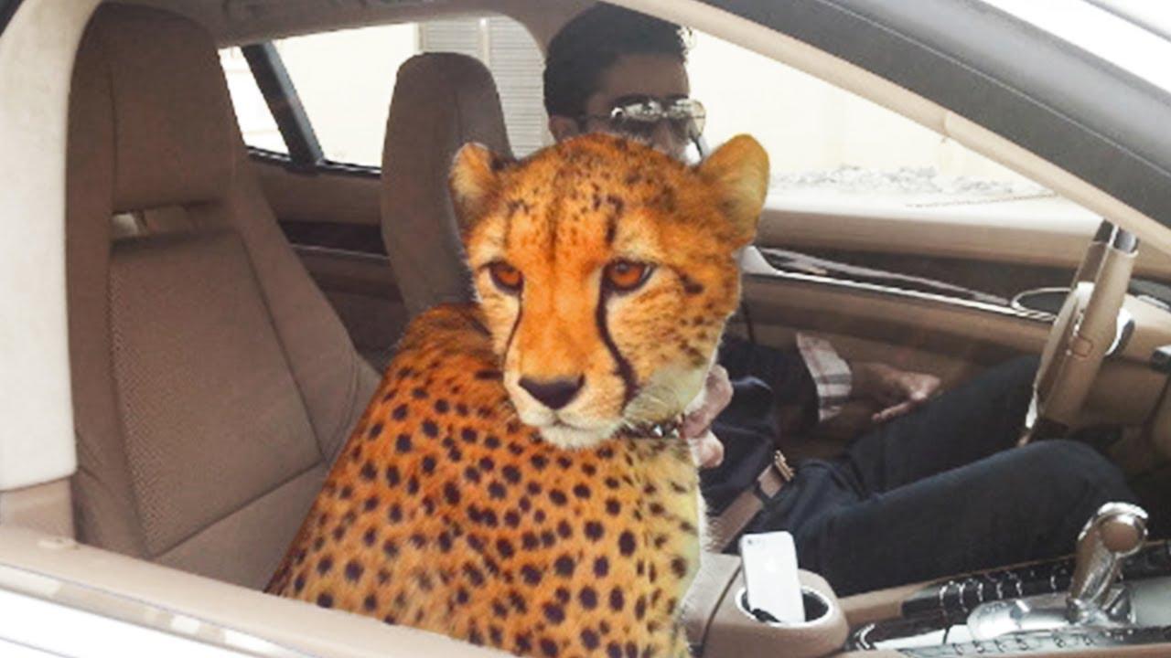 10 أشياء مذهلة لن تراها إلا في دبي