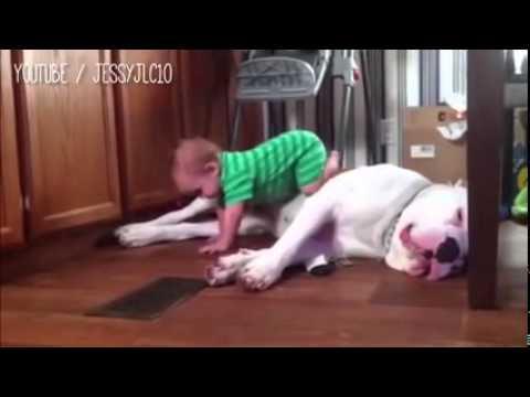 فيديو طريف لتعامل الكلاب مع الأطفال الصغار