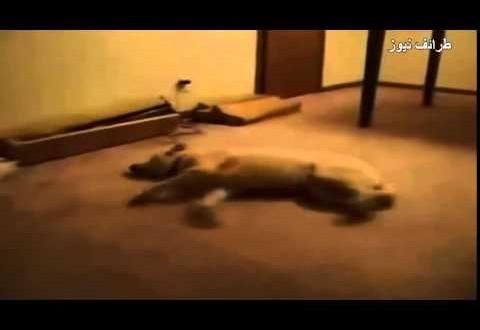 شاهد كيف تتصرف الكلاب أثناء حُلمها خلال النوم