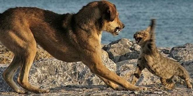 Dog-v-Cat-Web1