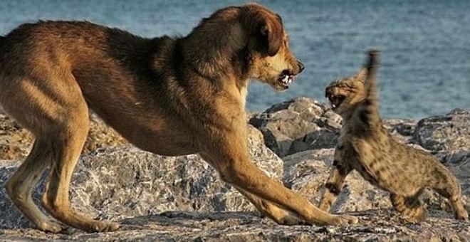 شاهد كيف تدافع القطط عن أبنائها من طغيان الكلاب