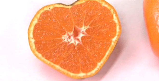 فواكه البرتقال على شكل قلب في مزارع اليابان