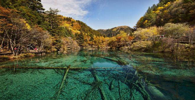 بالصور.. أكثر الغابات روعة في العالم