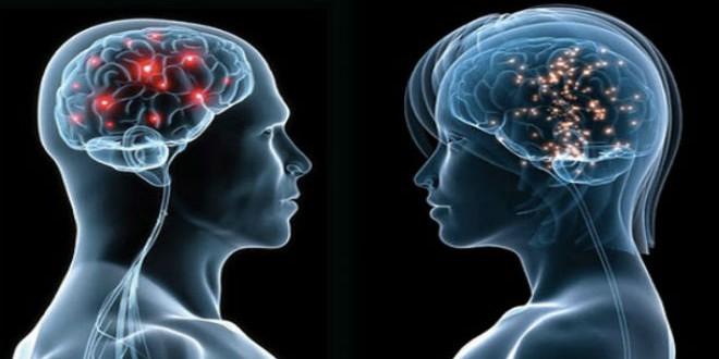 حجم الدماغ