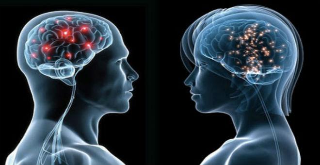 الدماغ كبير الحجم لا يعني زيادة الذكاء