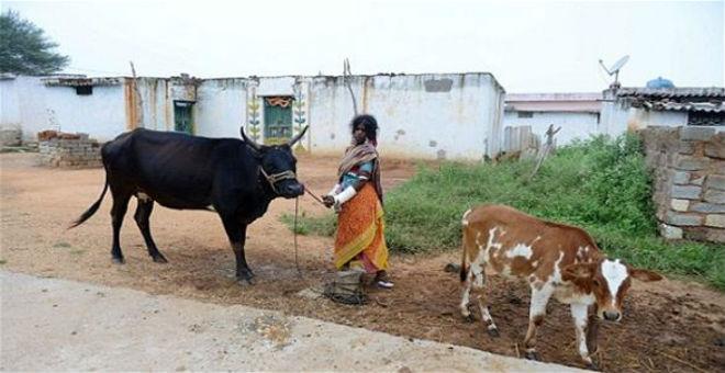 قرية الأرامل في الهند..يعيش فيها رجل واحد