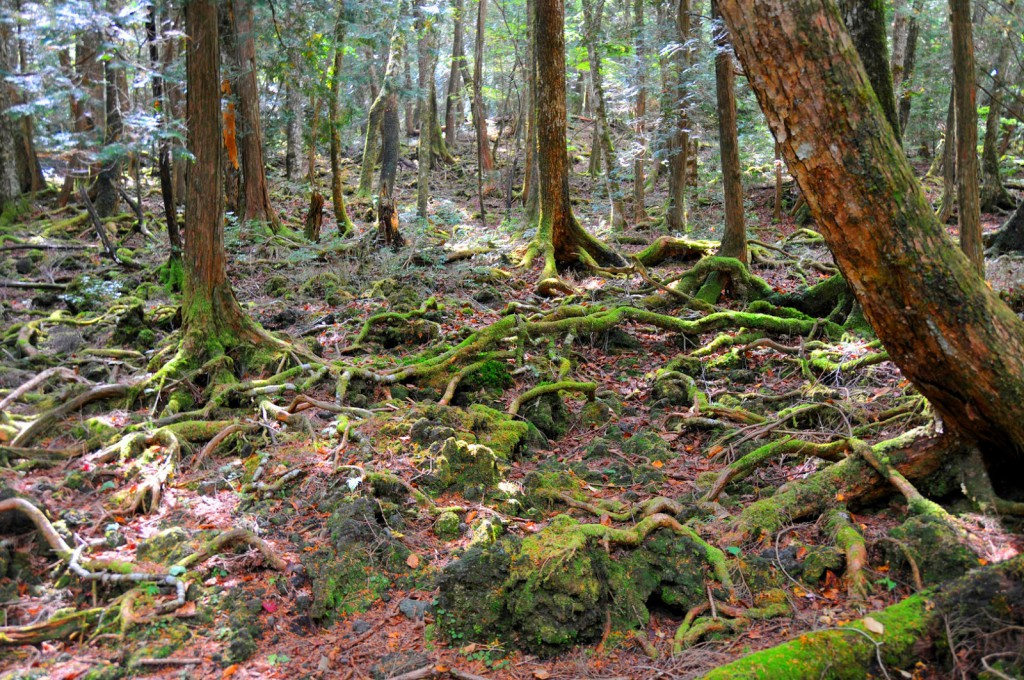 1 - Aokigahara_forest