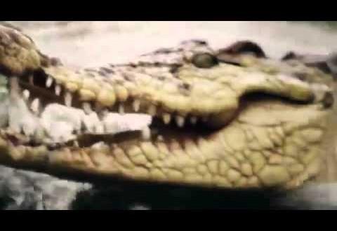 الرئيس الشيشاني يصطاد تمساحا حاول مهاجمته