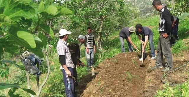 agriculture-plan-maroc-vert-2013-09-12