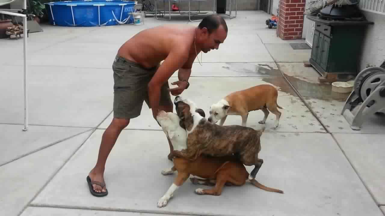 فيديو : حركات تفعلها لحماية نفسك من عضة كلب البيتبول