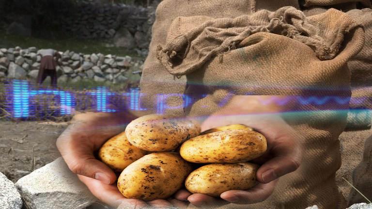 الانتقال من زراعة البطاطا الى الانترنت في بلدة جبلية بباكستان