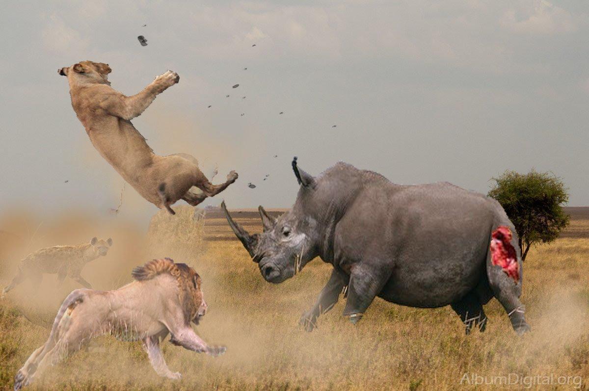 شاهد..أقوى المعارك بين أشرس الحيوانات