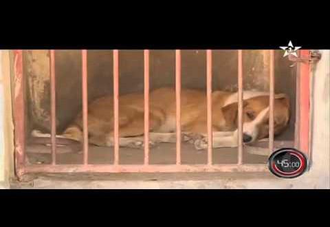 شاهد كيف تتم عملية قتل وحرق الكلاب الضالة في المغرب