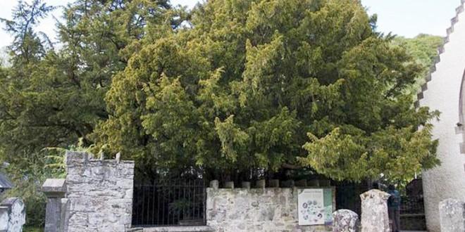 arbre111