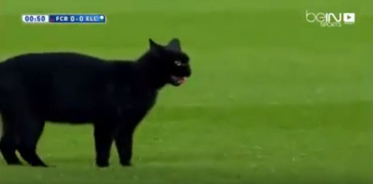 قط يتجول في ملعب برشلونة والمعلق يتفاعل معه