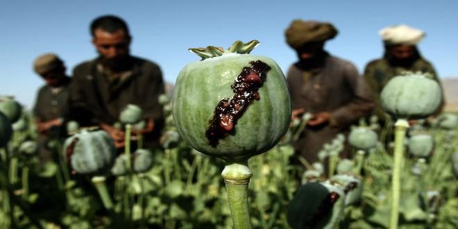 الأفيون الأفغاني