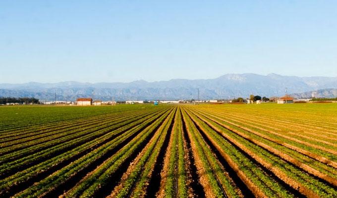 دعم بقيمة 132 مليون دولار لتمويل مشاريع زراعية بالمغرب