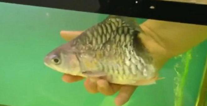 بالفيديو.. سمكة تعيش 6 أشهر بنصف جسد