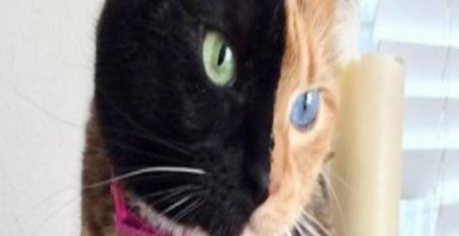 """قطة """"بوجهين"""" تحظى بنحو مليون متابع على """"فيسبوك"""""""