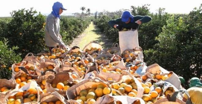 المغرب يعتمد تدابير إضافية لرفع تعليق صادرات الحوامض نحو السوق الأمريكية