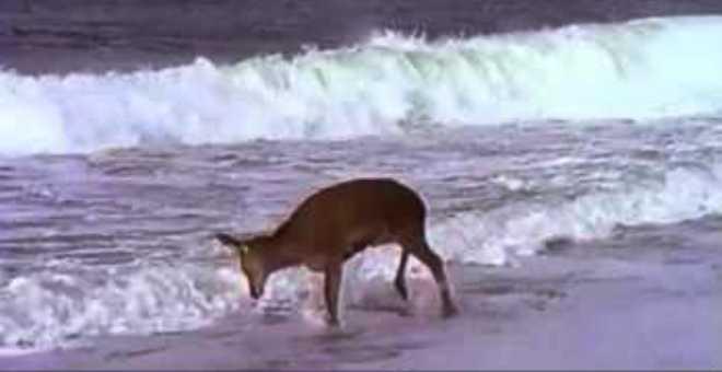 بالفيديو.. رد فعل غزال يرى البحر للمرة الأولى